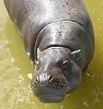 rio-safari-116.jpg