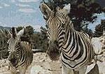 safari-aitana.jpg