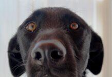 hund_ann-louise22.12.14.jpg