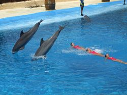 250px-dolphins_and_synchronized_swimming.jpg
