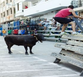 Foto: Okseløpet «Bous al Carrer» i Calpe (Ayuntamiento de Calpe 2016).