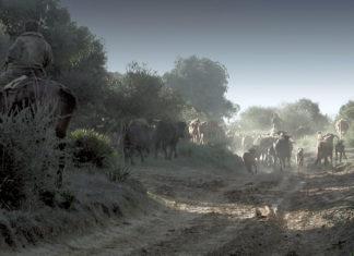 """Når """"los toros bravos"""" skal flyttes fra et beite til et annet, er det bare gamlemetoden med menn til hest som duger."""
