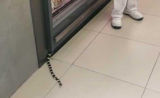 Slange på supermarked på Gran Canaria