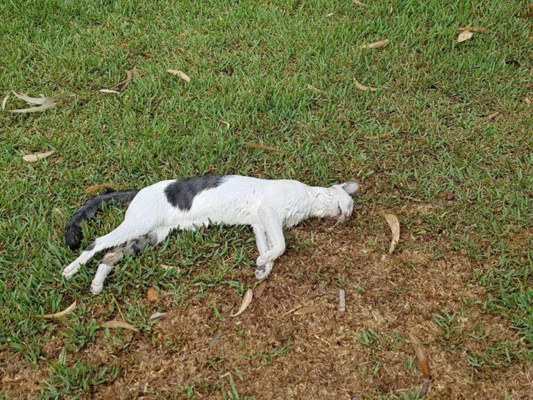 Etterforsker drap av katter i Orihuela Costa