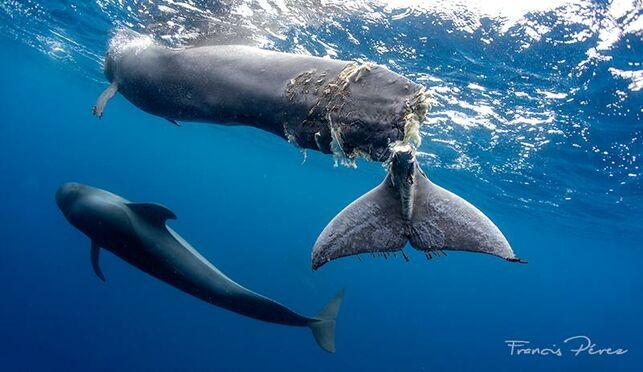 Infrarøde kamera skal forhindre kolisjon med hvaler på Kanariøyene